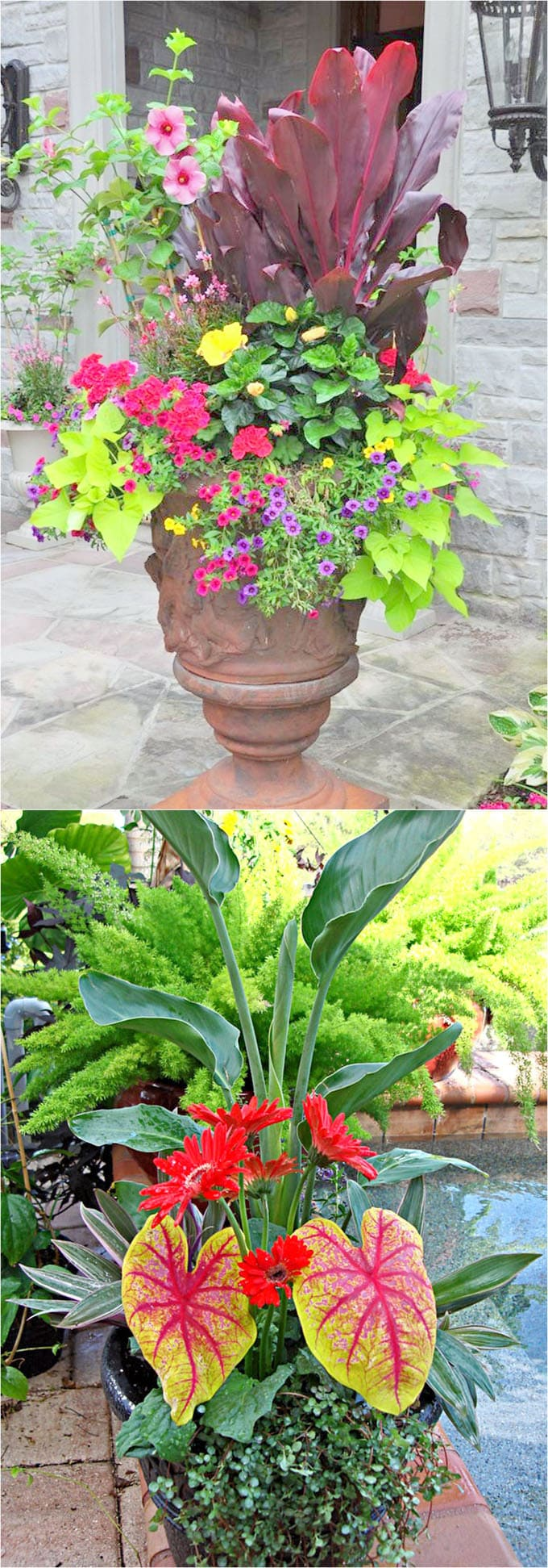 dramatic container gardens with colorful plants