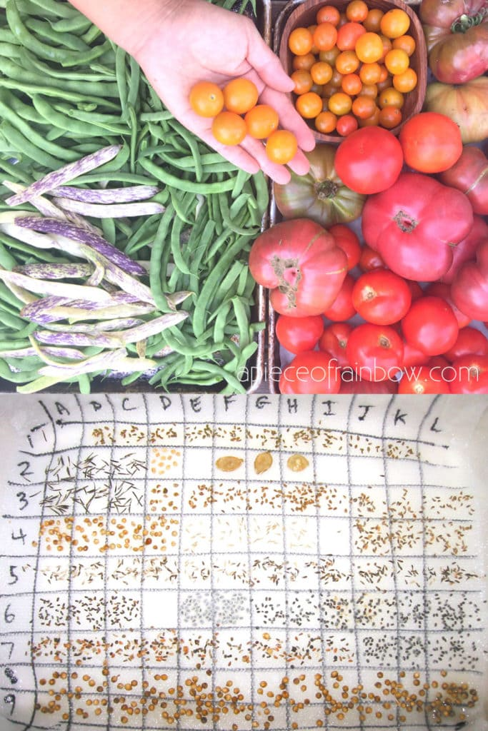 vegetable garden best tips to germinate seeds on paper towel