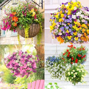 20+ best hanging basket plants for sun or shade, and how to plant 15 beautiful hanging baskets with complete plant lists for each! Easy care tips on soil, water and fertilizer to grow healthy hanging plants and flowers that last for months. - A Piece of Rainbow