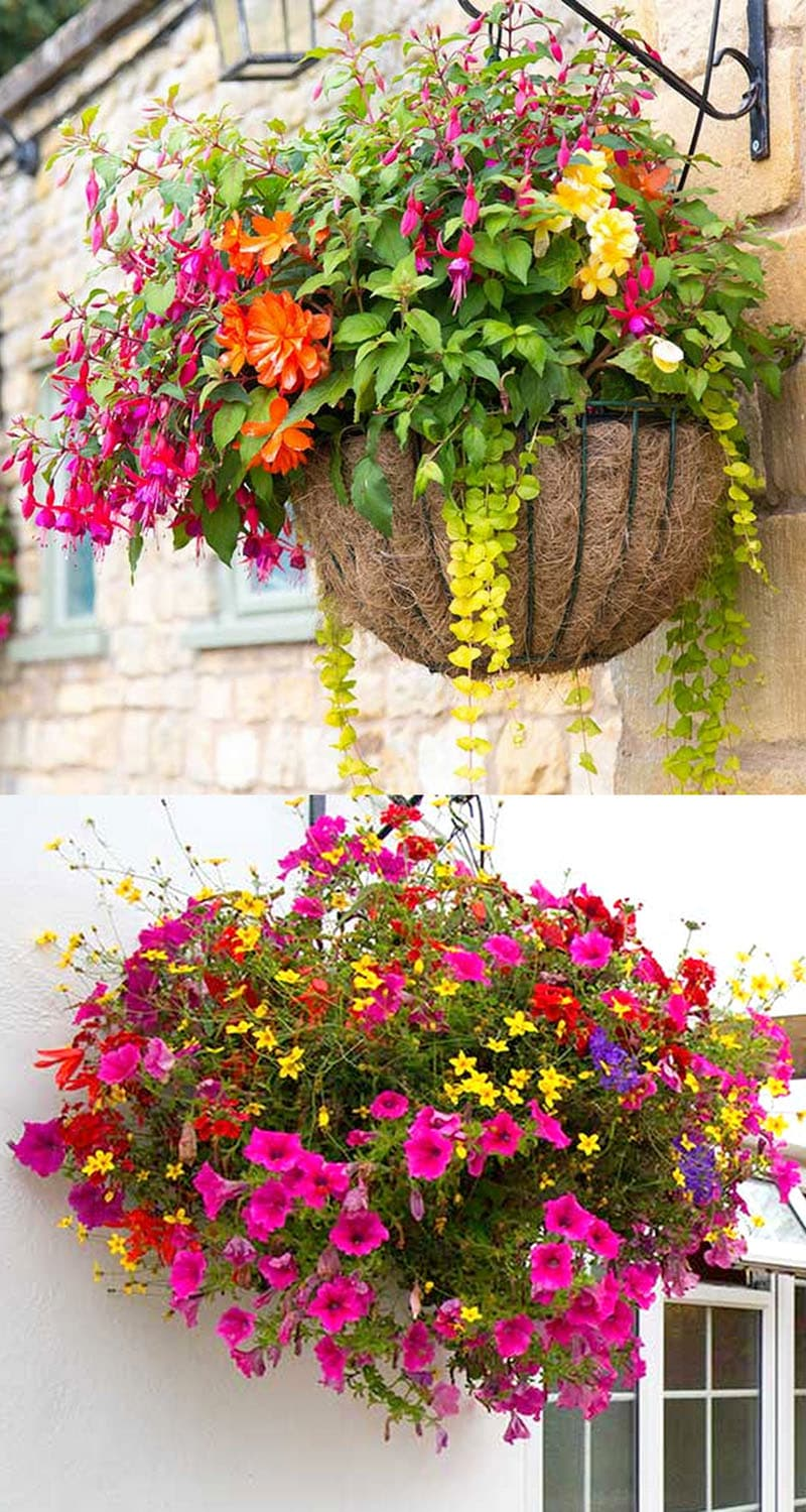 How To Plant Beautiful Flower Hanging Baskets 20 Best