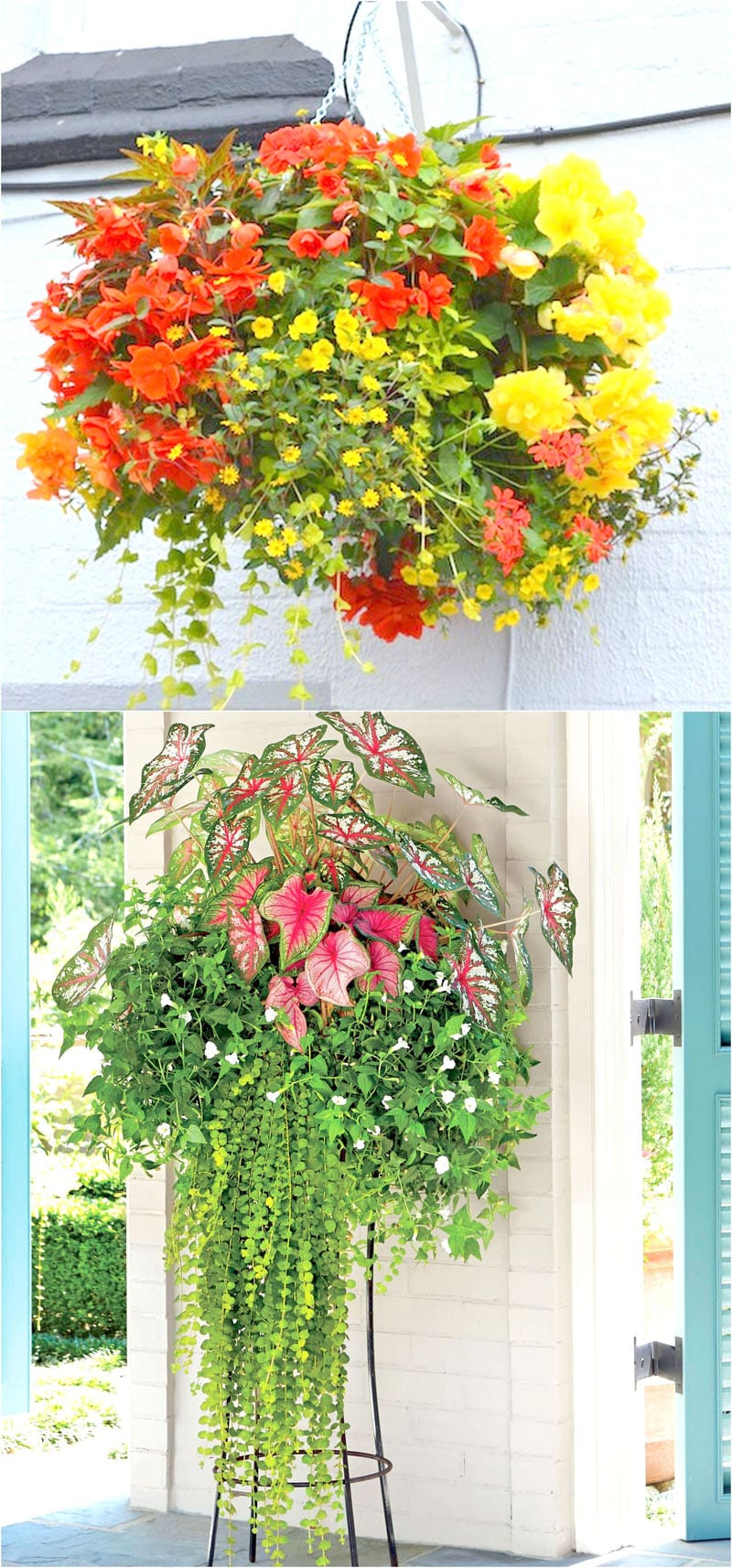 How to plant beautiful flower hanging baskets 20 best for How to hang flowers