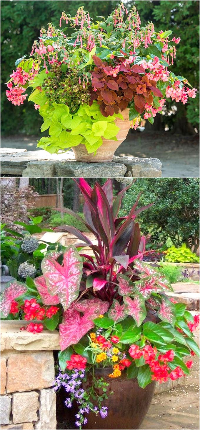 flowering shade plants in large container garden