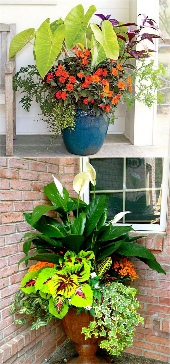 Best Shade Plants 30 Gorgeous Container Garden Planting Lists A Love Potted Decorative Choose Combination Of So You Have Dramatic Focal Point Fillers And Trailers Will See These 3 Design Elements Used In Many The