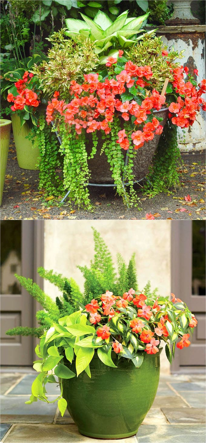 Best Shade Plants & 30+ Gorgeous Container Garden Planting ...