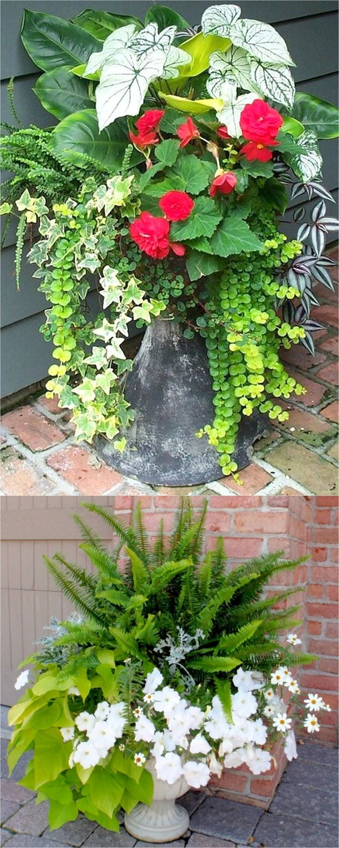 Best Shade Plants & 30+ Gorgeous Container Garden Planting Lists - A ...