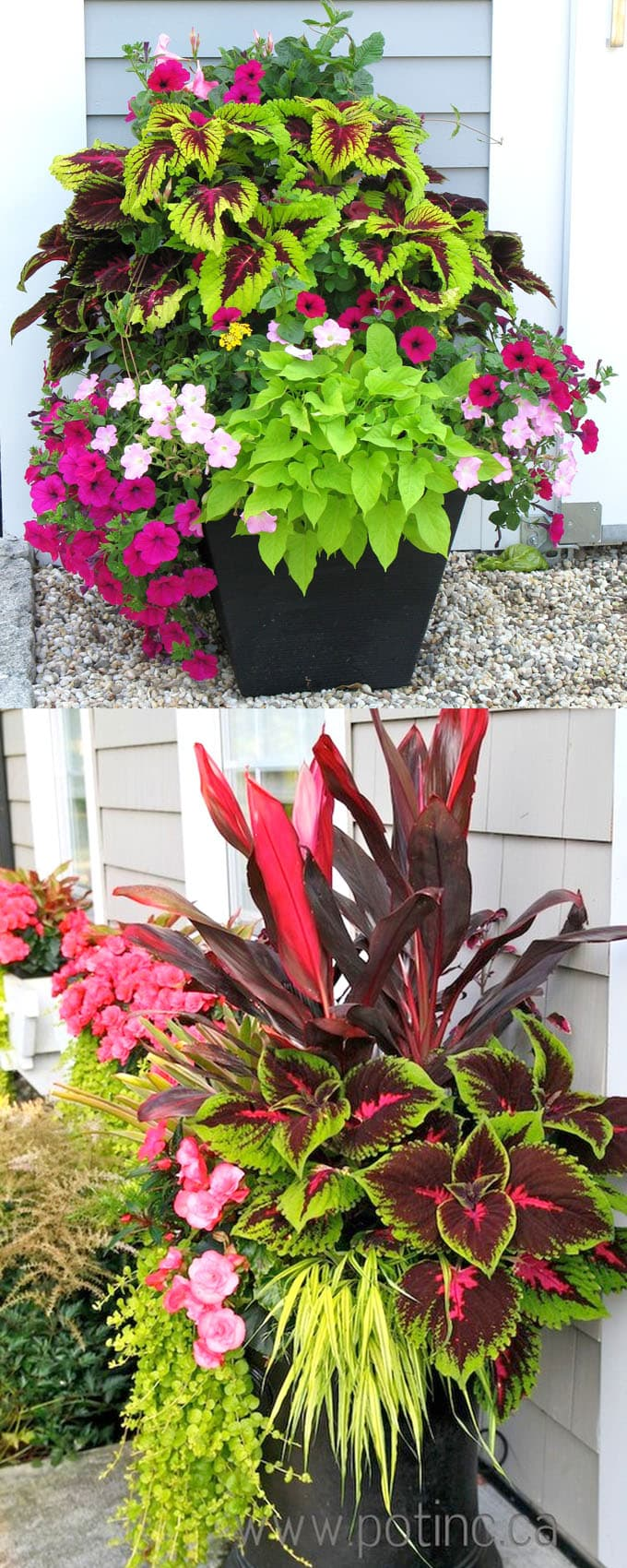 Best Shade Plants 30 Gorgeous Container Garden Planting Lists