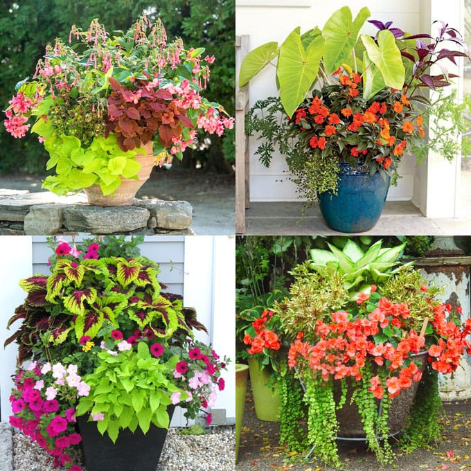 best shade plants 30 gorgeous container garden planting lists a piece of rainbow. Black Bedroom Furniture Sets. Home Design Ideas