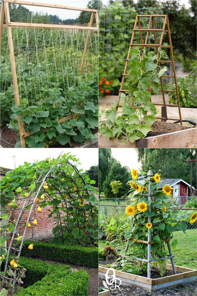 24 best DIY garden trellis ideas & designs: build easy cucumber trellis, bean teepee, beautiful vine pergola, plant screen, & vegetable garden structures!