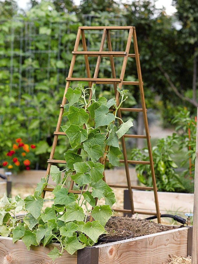 Simple and sturdy A-frame wood trellis panels