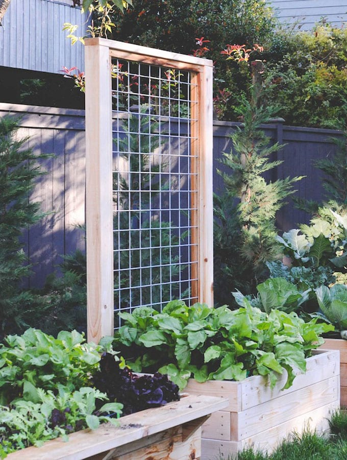 Raised planter trellis for vegetables