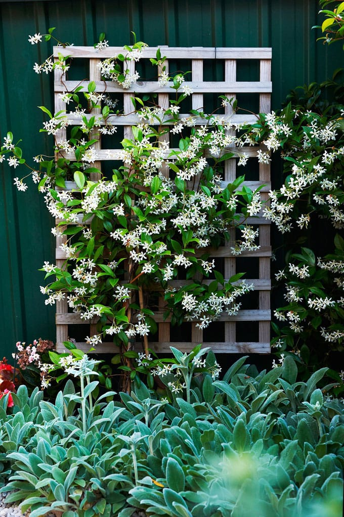 Wall trellis ideas