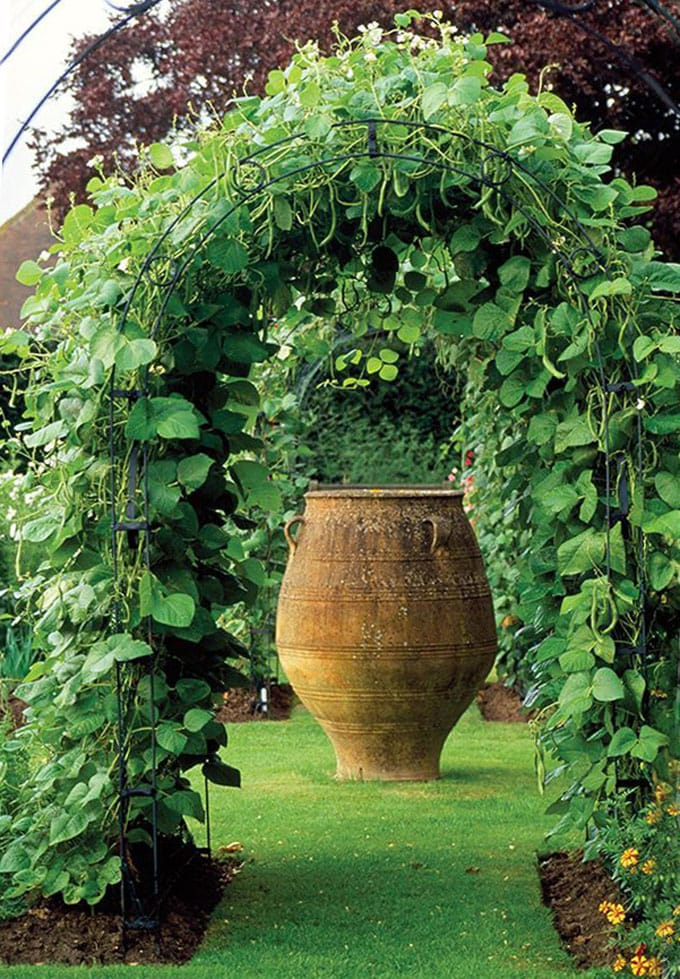 Beautiful plant trellis for vegetable gardens