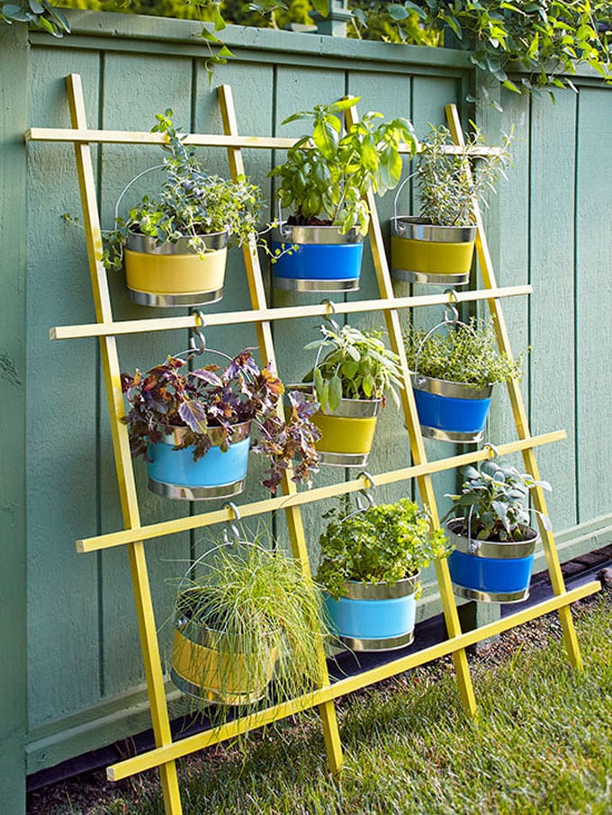 Ladder plant trellis ideas