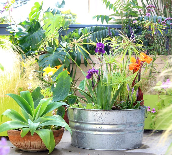 beautiful water garden plants in a solar fountain easy DIY patio pond