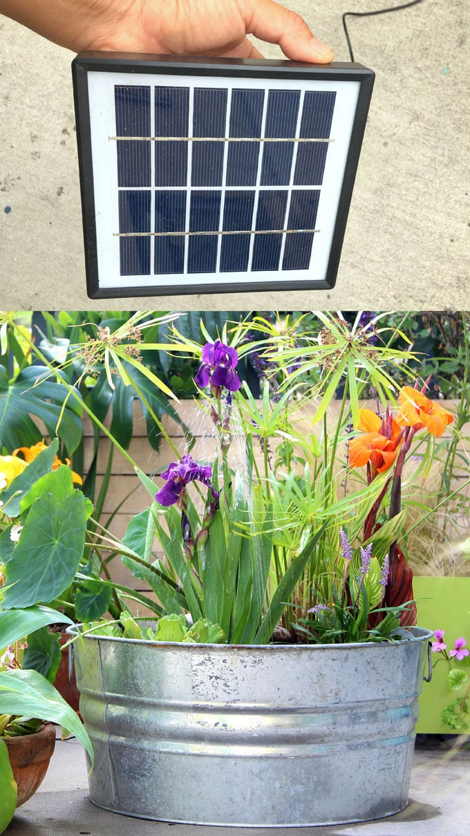 Easy DIY Solar Fountain in 1 Hour! {with Pond Water Plants