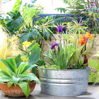 Easy DIY Solar Fountain In 1 Hour! {with Pond Water Plants}   A Piece Of  Rainbow