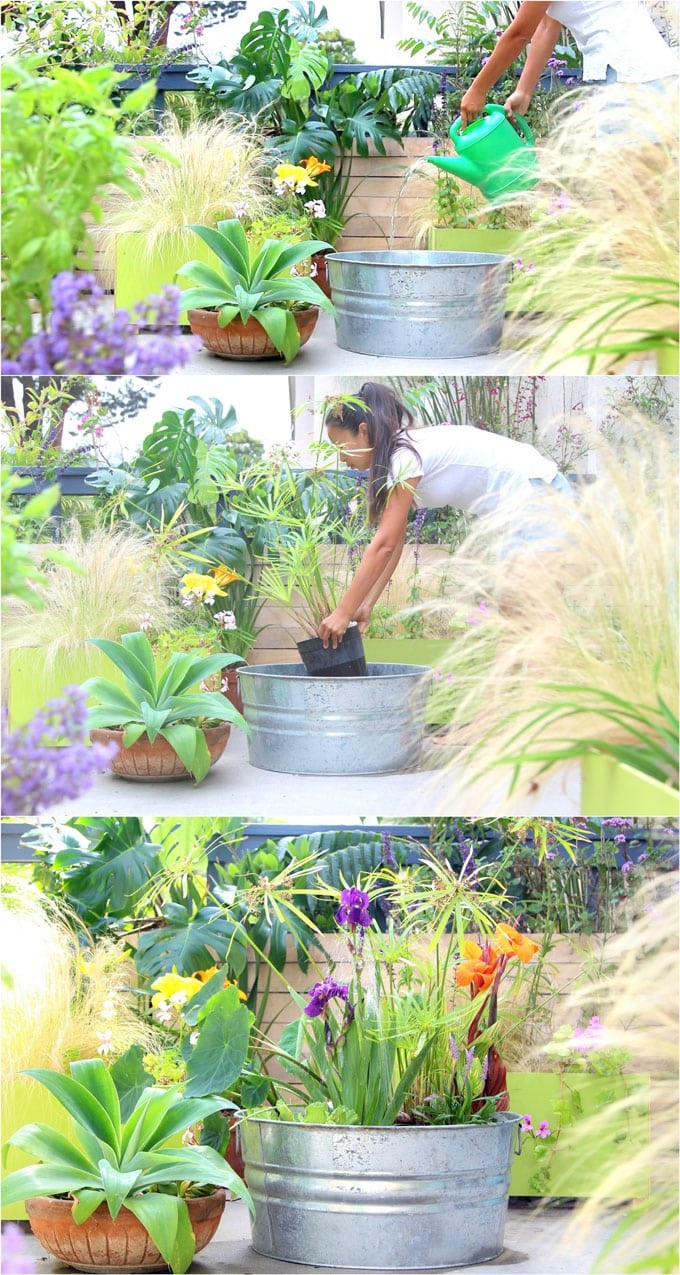 Easy DIY Solar Fountain in 1 Hour! {with Pond Water Plants ...