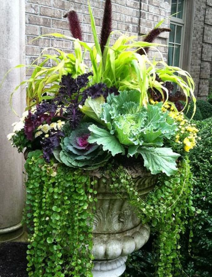 outdoor fall decorations Kale and  grass with mums and Creeping Jenny in a garden urn
