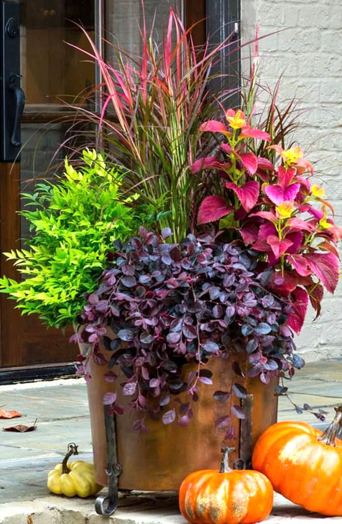 colorful foliage fall garden plants in pots on patio