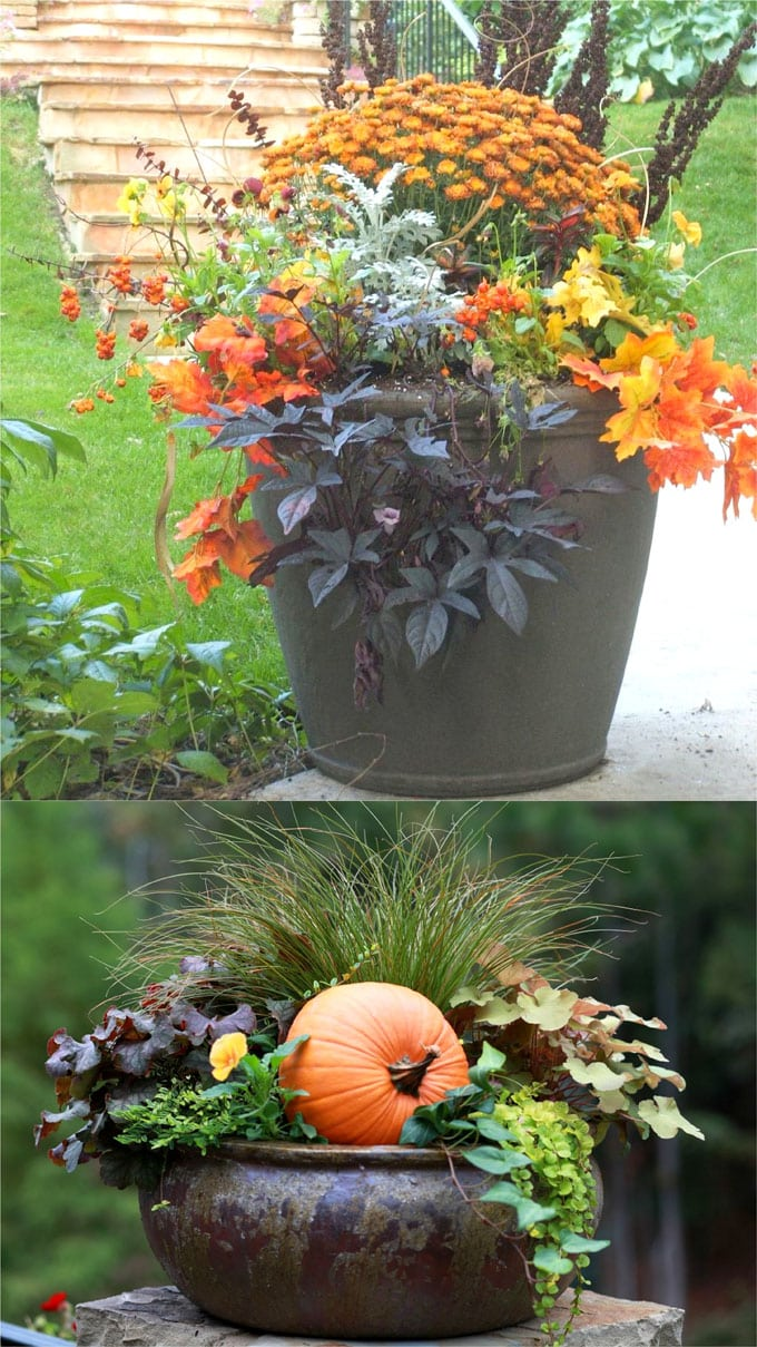 purple and orange fall pots and container gardens