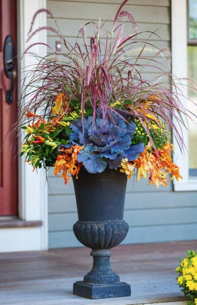 Their Beautiful Blue Or Sage Green Tones Form The Perfect Contrast With Orange Pumpkins And Golden Fall Leaves In This Container Garden