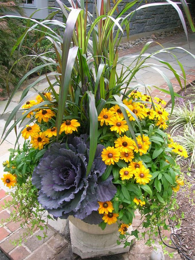 yellow daisies in fall flower pots as outdoor decorations