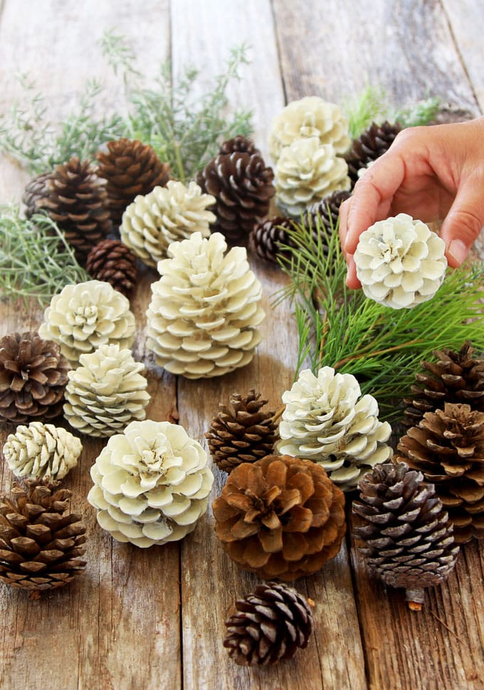 "DIY beautiful ""bleached pinecones"" in 5 minutes without using bleach"