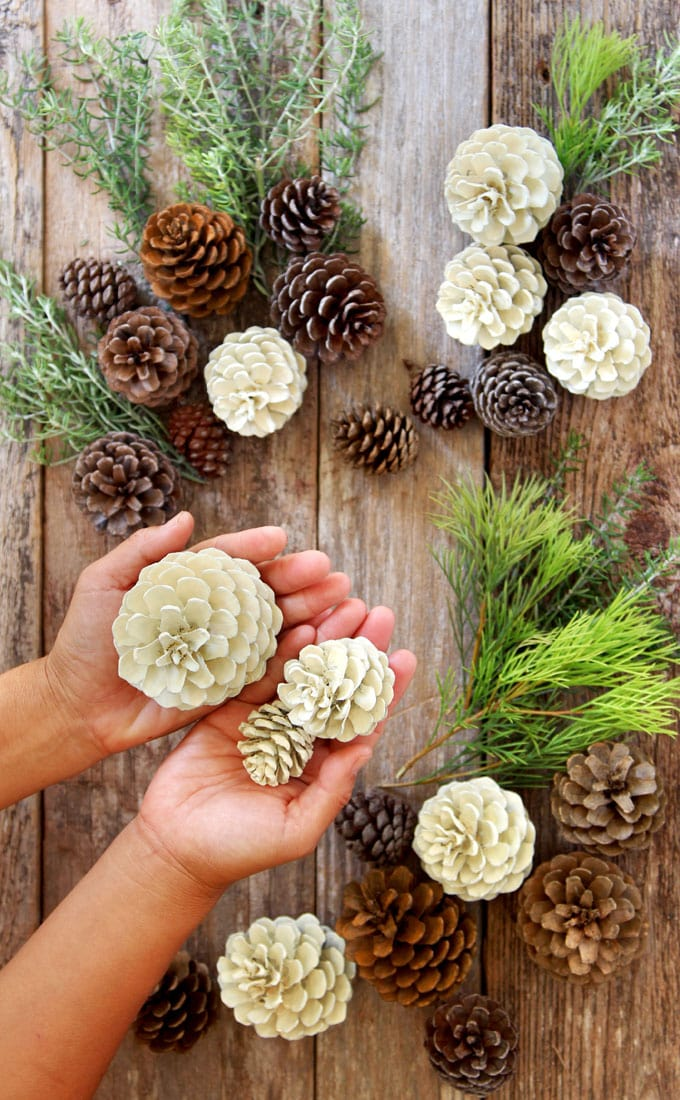 "Make beautiful ""bleached pinecones"" in 5 minutes without bleach! Non-toxic & easy DIY craft, perfect for fall, winter, Thanksgiving & Christmas decorations!"