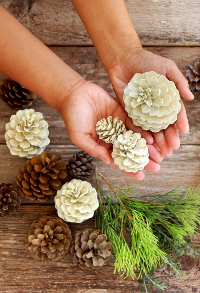 """a handful of beautiful """"bleached pinecones"""" in 5 minutes without using bleach"""