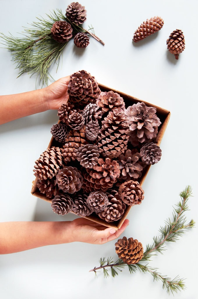 Turn these pine cones into incredibly beautiful decorations for your home and gifts for loved one in just 2 minutes, for FREE! Spoiler: you already have the other supplies in your kitchen! #pinecones #pineconecrafts #diy #homedecor #homedecorideas #diyhomedecor #thanksgiving #christmas #christmasdecor #christmascrafts #christmasideas #christmasdecorations #crafts #fall #winter #farmhouse #vintage #farmhousestyle #farmhousedecor #weddingdecor