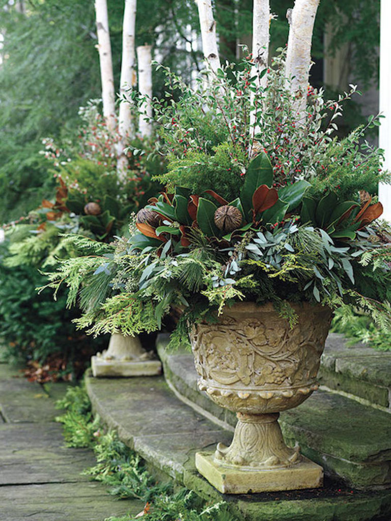 Best plants and cuttings for winter planters and Christmas outdoor decorations.