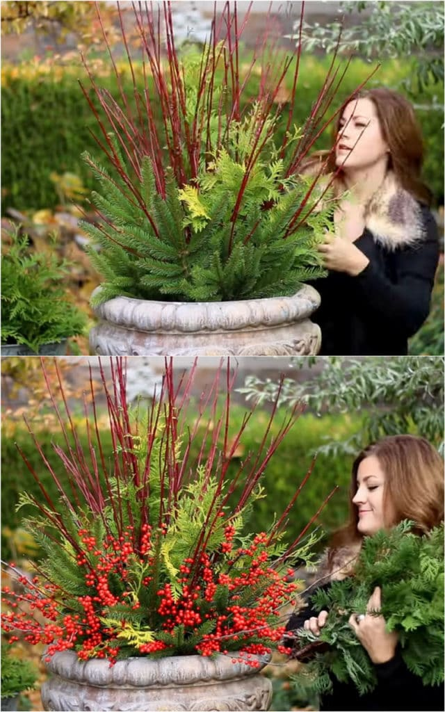 how to make a gorgeous Christmas planter urn using Red Twig Dogwood, Holly Berry and mixed conifer branches.