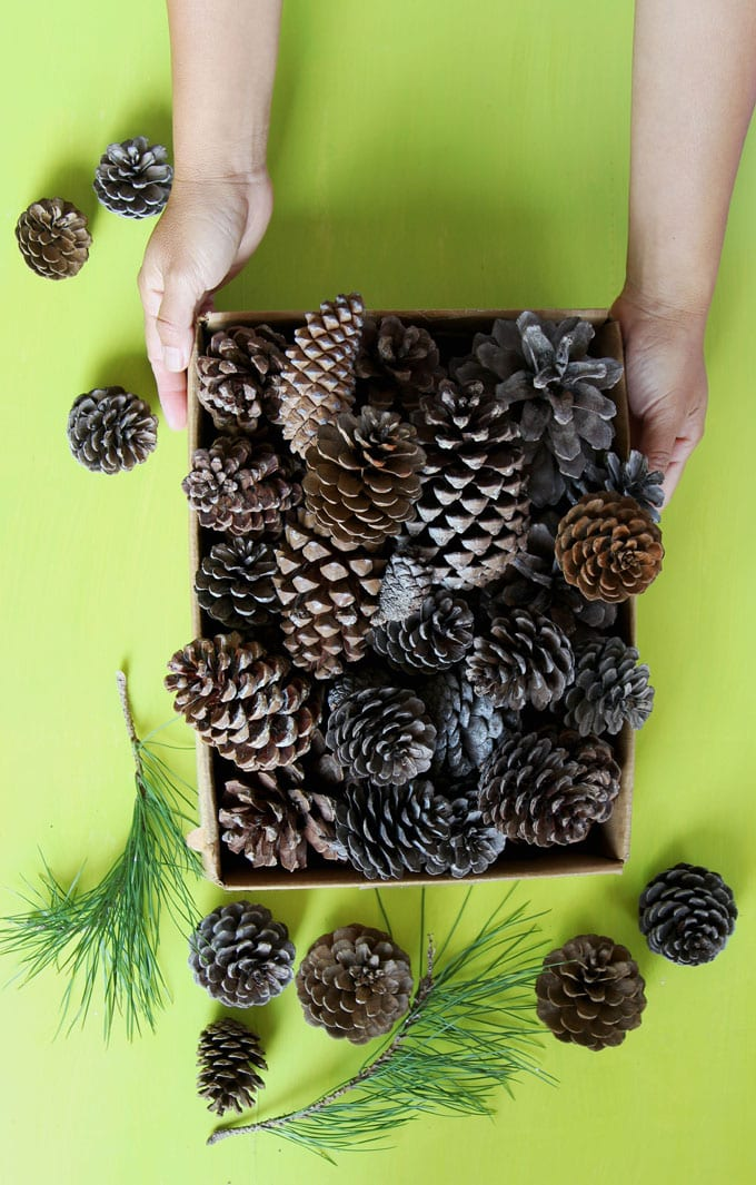 Copy this $1 beautiful DIY idea perfect for happy pine cone season! It will look so GORGEOUS in your home! #pinecones #pineconecrafts #diy #homedecor #homedecorideas #diyhomedecor #thanksgiving #christmas #christmasdecor #christmascrafts #christmasideas #christmasdecorations #crafts #crafting #centerpiece #farmhouse #vintage #farmhousestyle #farmhousedecor #weddingdecor #wreath