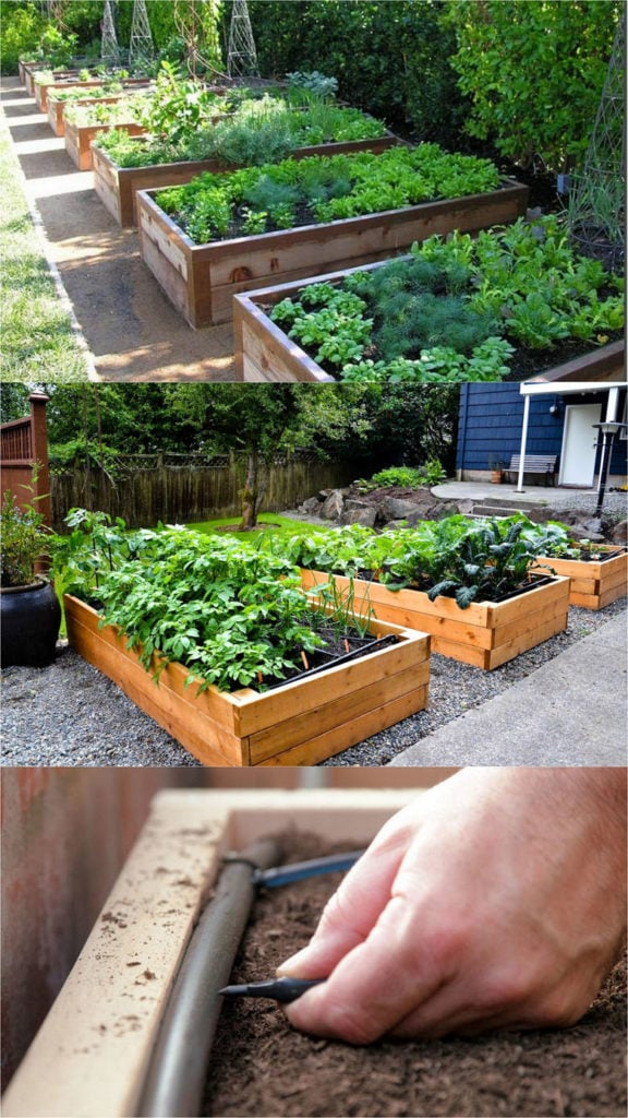 build raised beds or vegetable & flower garden box planters  using wood