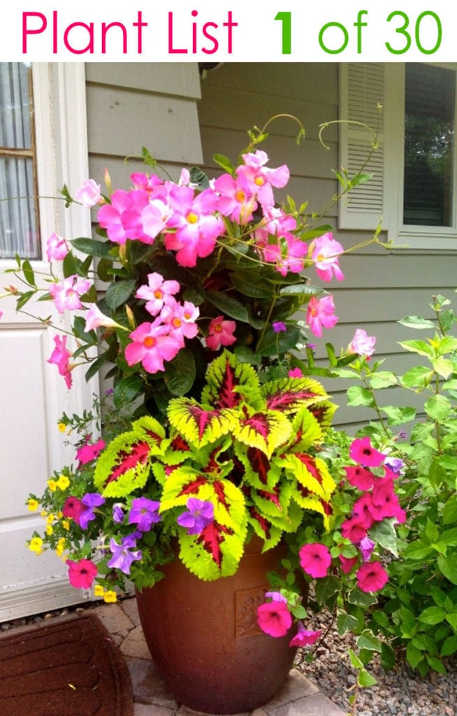 bright color flower gardening with designer plant lists & combinations for easy sun & shade containers