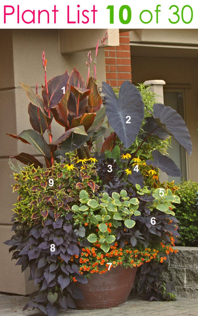 flower gardening in beautiful mixed pots & planters with designer plant lists & combinations