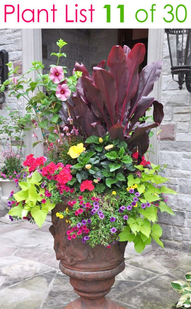 beautiful landscape design with flower gardening in urn pot
