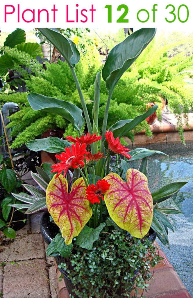 tropical plants in mixed garden pot by pool
