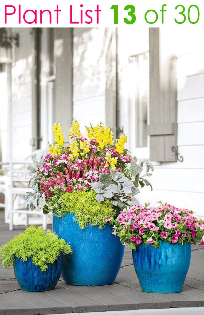 group of 3 blue pots in different sizes with colorful flowers on patio