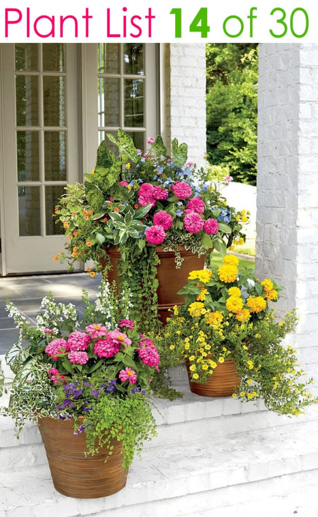 3 flower planters with pink and yellow flowers on porch
