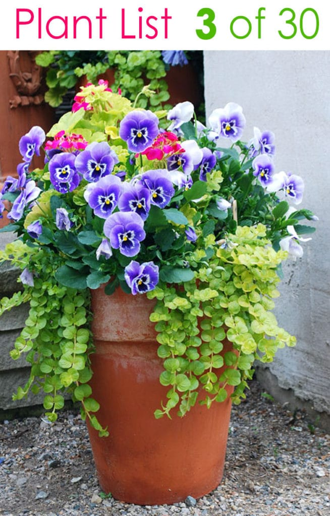 country style flower container gardening