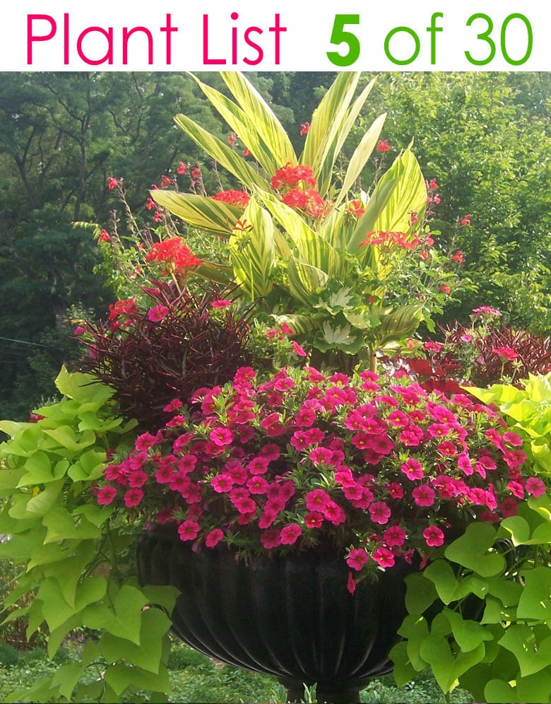 pink and red flowers in urn planter