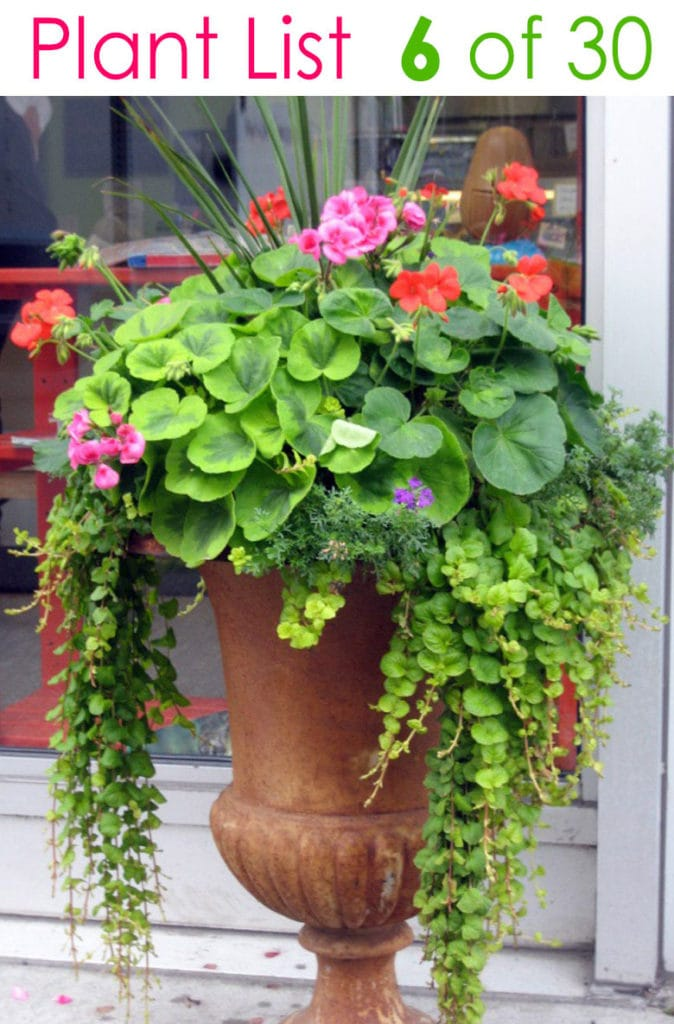 flower gardening in beautiful mixed pots & planters