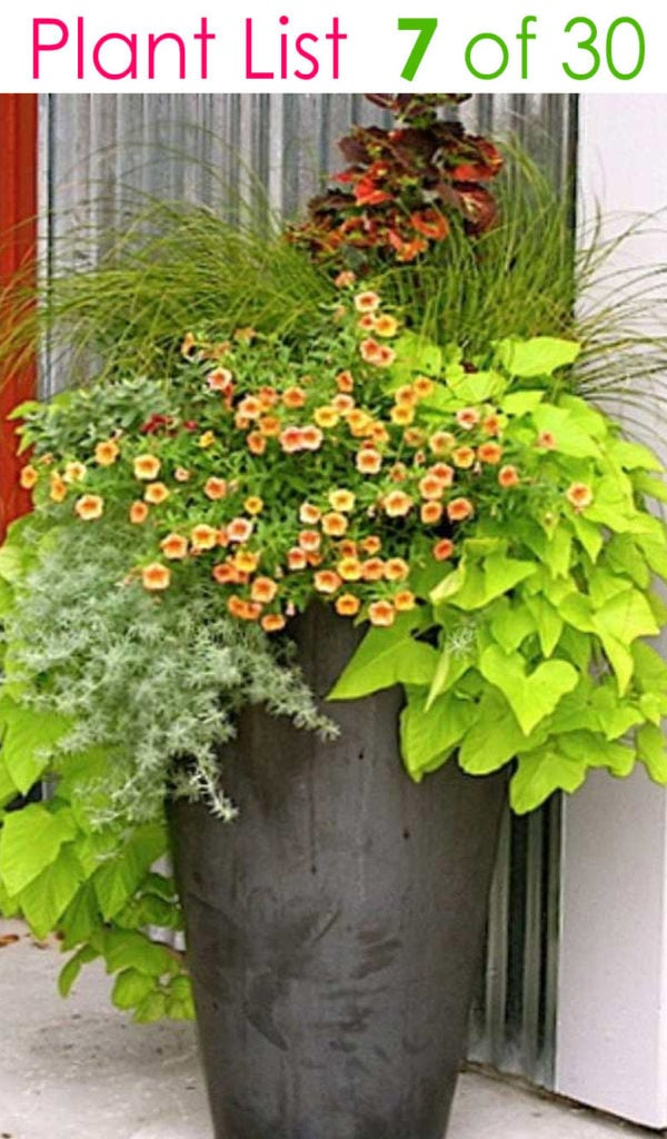 tall planter with trailing plants