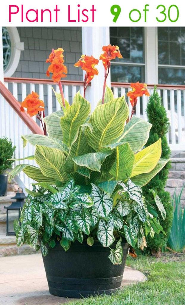 beautiful mixed planter pot