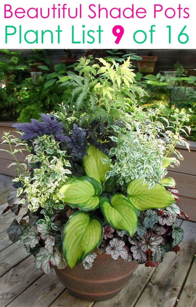 Shade garden ideas with mixed color foliage container plants