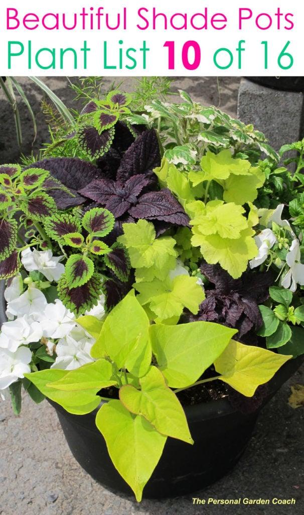 Easy foliage plants for shade garden designs