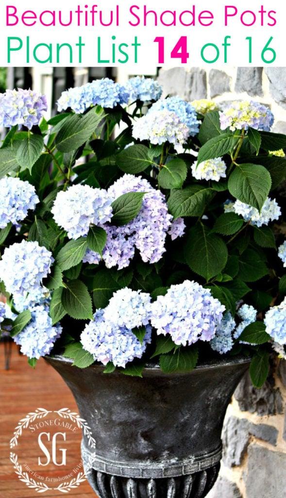 French country garden shade planter pots