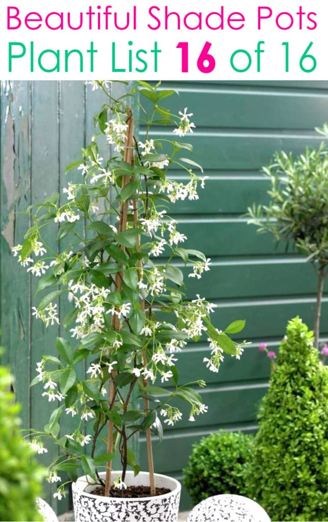 white shade garden  with jasmine
