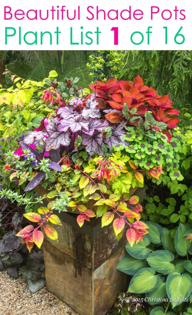 Shade pots with beautiful mixed foliage